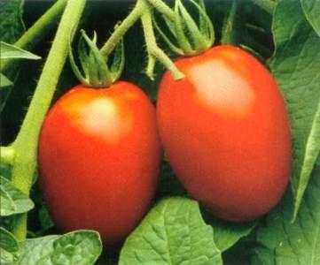 Roma Tomatoes (Acid Free)
